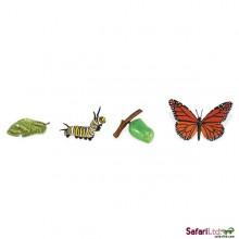 Lebenszyklus Schmetterling Monarchfalter