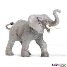 Afrikanischer Elefant, trötend