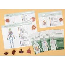 Organe Set