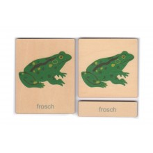 Klassifikation Körperbau Frosch