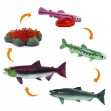 Lebenszyklus des Lachses