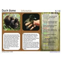 Duck Game (Dieser Artikel ist auch in deutsch erhältlich)